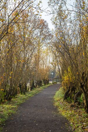 Gravel footpath lined by pollard willows, leading towards a pedestrians bridge in a green garden in autumn foliage