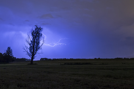 thundering: Lightning strikes behind a tree silhouette on a field