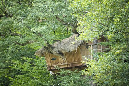 Treehouse hidden high in the trees looking out over the forest edge.