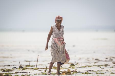algas marinas: Zanzíbar, Tanzania - 21 de enero de 2015. Las mujeres cosechan las algas para jabón, cosméticos y medicin. La temperatura puede aumentar debido al cambio climático es la razón de la mortalidad de las algas marinas.