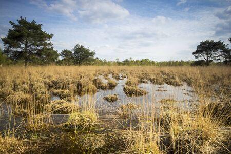 turba: Los humedales con vegetación podrida conocido como turba o esfagno en un día soleado en la primavera.