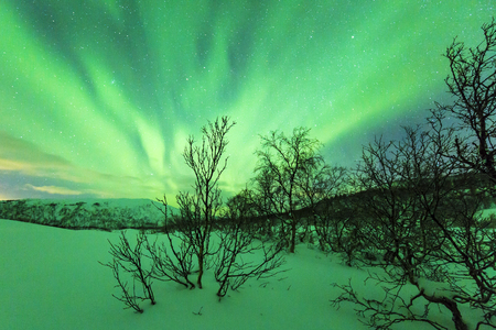 Northern lights Aurora Borealis in the night. A artic, snowy winter landscape with trees and bushes on the foreground. The sky is clear, stars are visible Stock Photo