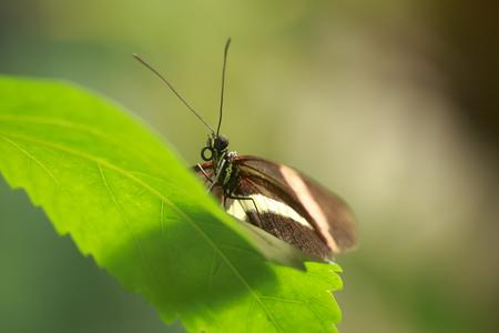 Feche acima de uma borboleta tropical do carimbo vermelho Heliconius erato descansando na vegetação da selva e flores em flor. Banco de Imagens