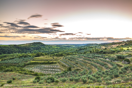 Sunset at a idyllic green vineyard at the farmland of Istria, Croatia.