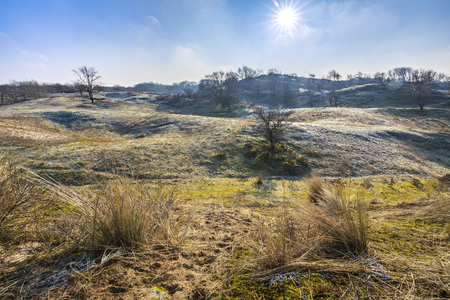 Winter dune landscape with frost during sunrise under a clear blue sky. Stockfoto