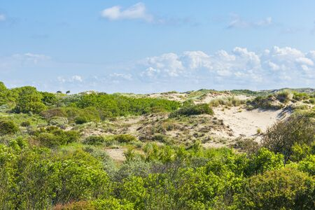 Landscape with dunes and wild nature during sunset in the national park Meijendel at the Dutch coast Stockfoto