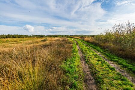 Moorland, peat moss landscape at national park de Groote Peel, Limburg, the Netherlands. Autumn scenery under a sunny blue sky. Natural light, high dynamic range, HDR, image Фото со стока - 133512720