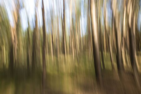 Spruce trees forest on a sunny day during Autumn season Фото со стока - 133512745