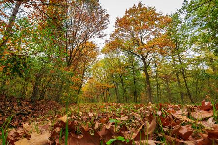Autumn forest landscape in daylight scenery, vibrant colors