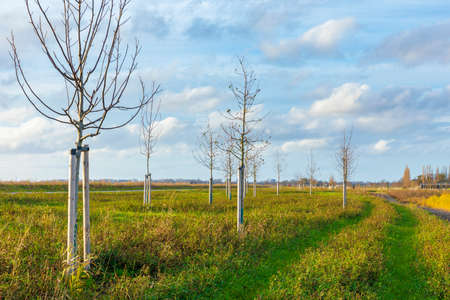 Planting young trees to grow a new forest in a new nature landscape called de Nieuwe Driemanspolder, the Netherlands 免版税图像