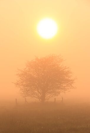 solitair: Tree at a foggy sunrise Stock Photo