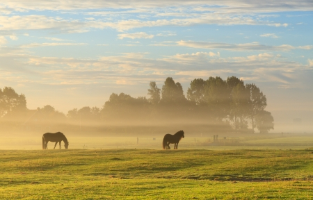 Horses in a foggy meadow in autumn  photo