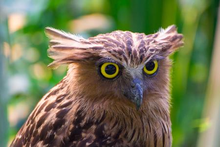 Eagle OwlAn eagle owl