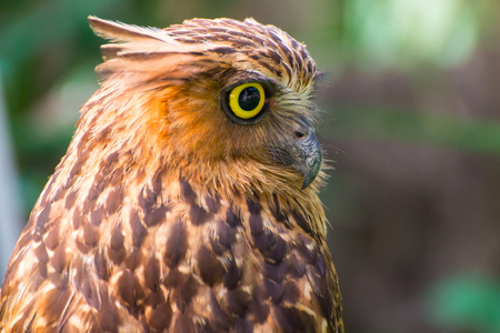 Owl face close up 写真素材