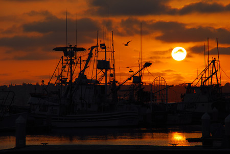 fishing fleet: The San Diego fishing fleet in the harbor at sunset as a lone seagull flies over the rigging.