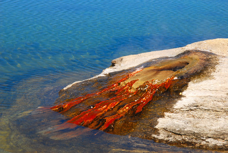 A geyser slowly gurgles producing colorful bacteria in the Yellowstone River in Wyoming. 版權商用圖片