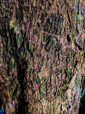 This is the rough color full Tamarix tree's bark.