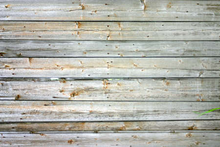 boughs: old rough scratched faded wooden board with boughs Stock Photo