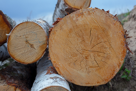 sawed: Wood rings - round muzzle