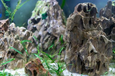 Small fish in the aquarium.