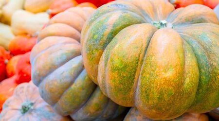 Big yellow pumpkin. Halloween autumn holiday.