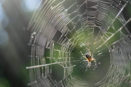 Little spider on web. Predatory insect in its natural habitat.