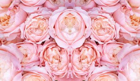 Beautiful blooming roses in different shades of pink. Floral pink natural background. 免版税图像 - 139602012