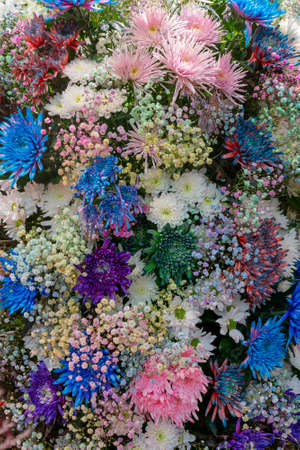 Beautiful background of asters. Floral festive natural background. Foto de archivo