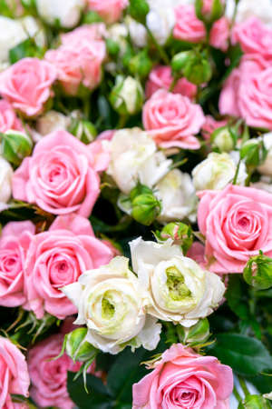 Beautiful pink and white roses. Floral festive natural background.