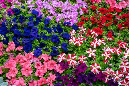 Beautiful background of flowers. Floral festive natural background. Foto de archivo