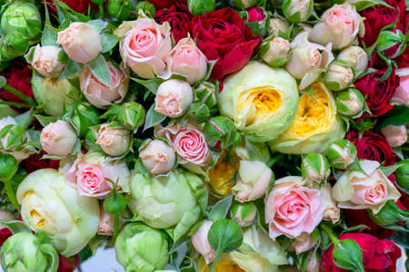 Beautiful white and pink roses. Floral festive natural background. Foto de archivo
