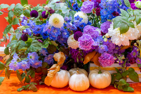 Beautiful decorative plants and flowers. Natural background.