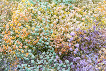 Beautiful small multi-colored flowers. Natural flower background.