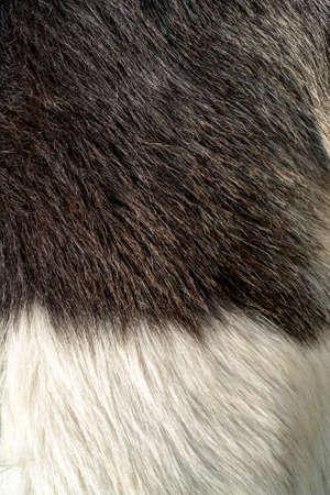 Black and white wool of a goat. Pet fur texture. Фото со стока