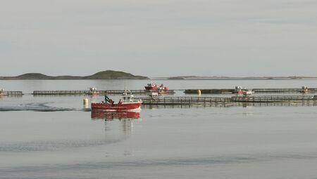 salmonidae: Sea farm