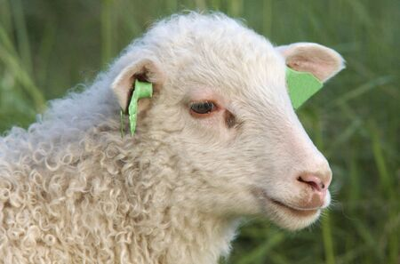 conjecture: Lamb