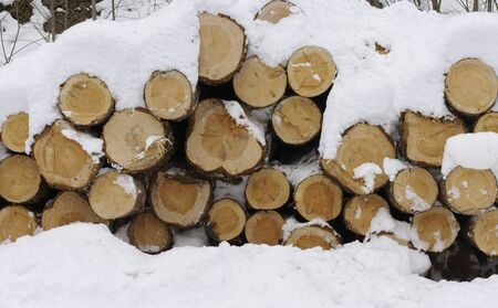 Norwegian timber. Stock Photo