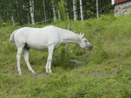 horse Stock Photo - 14900055