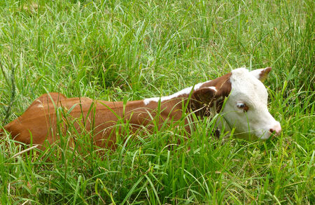 ruminants: Cov