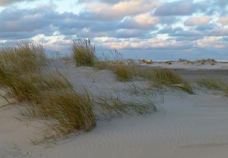 flatly: Sand dune