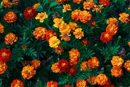 florecitas: Pequeñas flores rojas y anaranjadas en el jardín