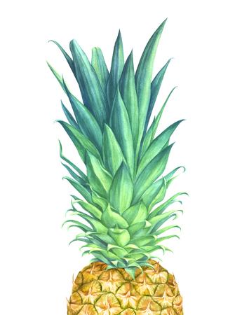 白い背景の水彩画のパイナップル