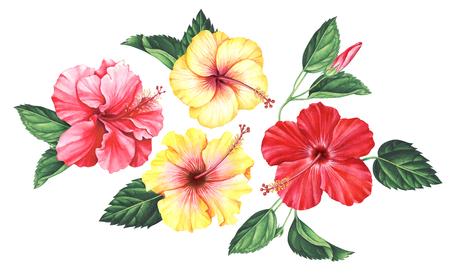 赤いハイビスカスの葉と芽は白い背景で隔離手描き水彩イラスト の