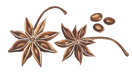 Star anise with seeds isolated on white background. Hand drawn watercolor illustration.