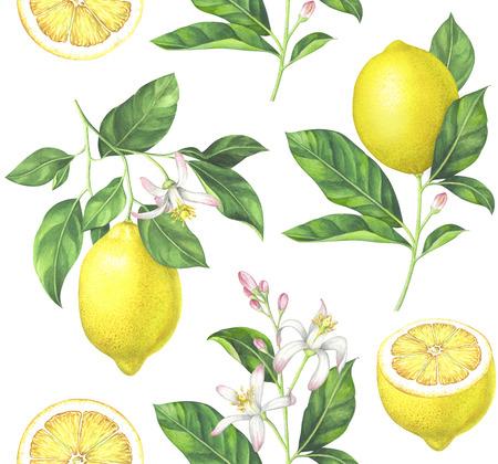 흰색 배경에 레몬 패턴입니다. 손으로 그린 수채화 그림입니다.