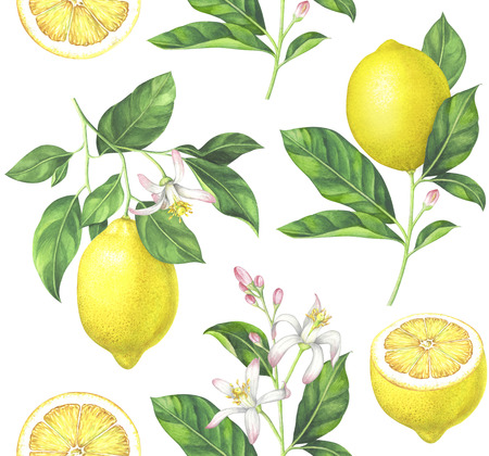 Lemon pattern on white background. Hand drawn watercolor illustration.