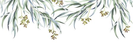 Willow eucalyptus branches isolated on white background. Watercolor hand drawn illustration.