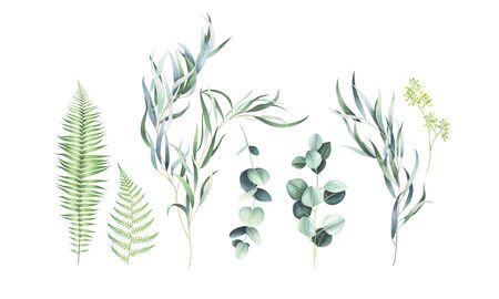 Set of eucalyptus and fern branches isolated on white background. Watercolor hand drawn illustration. Stock Photo