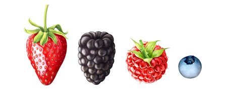 Hand drawn watercolor illustration of berries. Strawberry, blackberry, raspberry, blueberry isolated on white background.