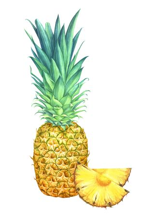 Pineapple with slices isolated on white background. Hand drawn watercolor illustration.